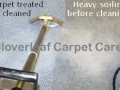 during cleaning of commercial carpet