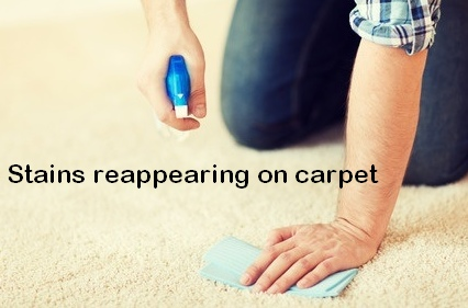 why do stains come back on carpet